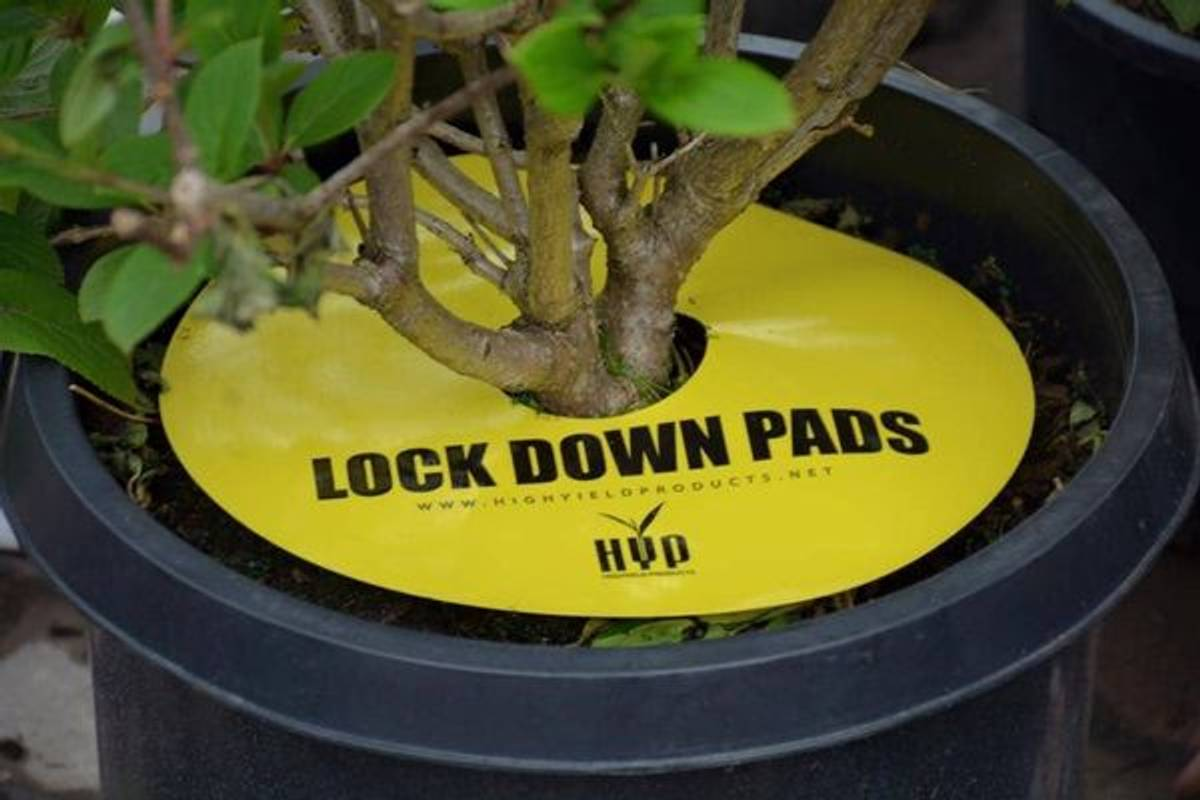 HYP Lockdown Pads 8 pk, 6